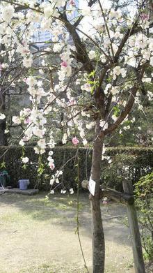 ティーエスピー多田多延子のブログ-2009040514000001.jpg