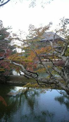 ティーエスピー多田多延子のブログ-2009112115130001.jpg