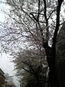 ティーエスピー多田多延子のブログ-2010040717220000.jpg