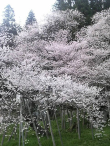 ティーエスピー多田多延子のブログ-2010042117260001.jpg