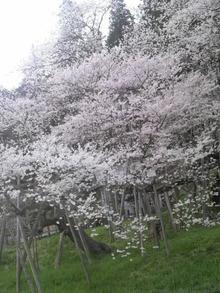 ティーエスピー多田多延子のブログ-2010042117260000.jpg