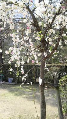広島LOVEハッピー社長ブログ-2009040514000001.jpg