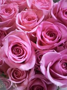 広島LOVEハッピー社長ブログ-2011012722320000.jpg