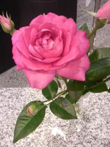 広島LOVEハッピー社長ブログ-2011061216270000.jpg