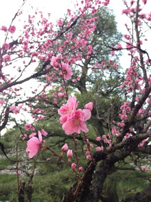 広島をこよなく愛するピンク社長 多田たえこ-image